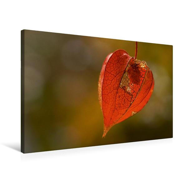 Premium Textil-Leinwand 75 cm x 50 cm quer, Ein Motiv aus dem Kalender Eine Reise durch den Garten   Wandbild, Bild auf Keilrahmen, Fertigbild auf echter Leinwand, Leinwanddruck - Coverbild