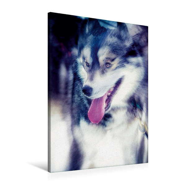Premium Textil-Leinwand 60 cm x 90 cm hoch, Ein Motiv aus dem Kalender Huskies - Artwork | Wandbild, Bild auf Keilrahmen, Fertigbild auf echter Leinwand, Leinwanddruck - Coverbild
