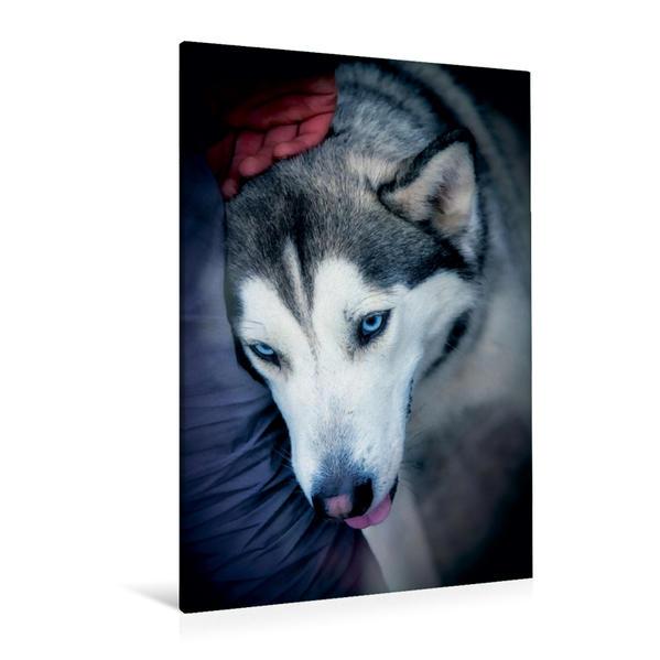 Premium Textil-Leinwand 80 cm x 120 cm  hoch, Ein Motiv aus dem Kalender Huskies - Artwork | Wandbild, Bild auf Keilrahmen, Fertigbild auf echter Leinwand, Leinwanddruck - Coverbild
