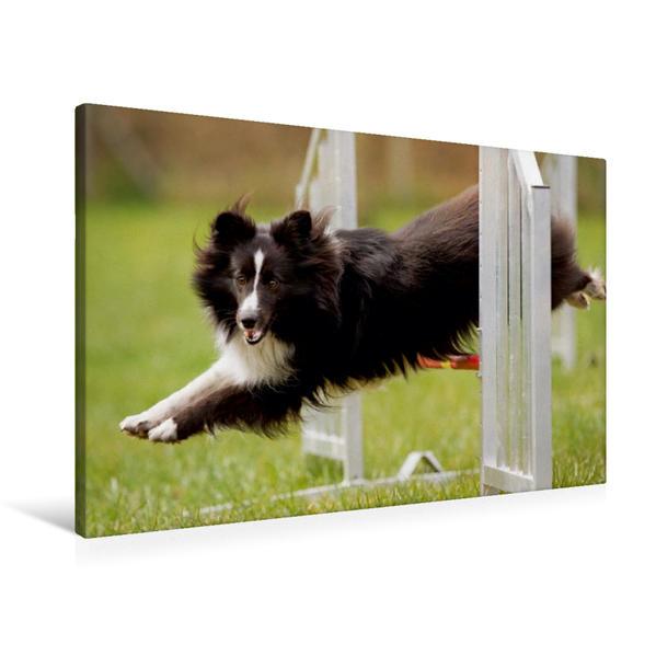 Premium Textil-Leinwand 90 cm x 60 cm quer, Ein Motiv aus dem Kalender Fliegende Hunde beim Agility | Wandbild, Bild auf Keilrahmen, Fertigbild auf echter Leinwand, Leinwanddruck - Coverbild