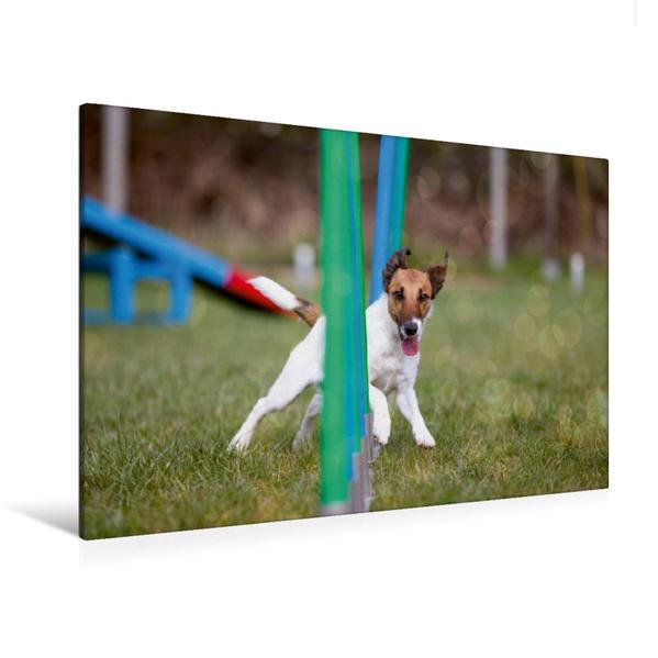 Premium Textil-Leinwand 120 cm x 80 cm quer, Ein Motiv aus dem Kalender Fliegende Hunde beim Agility | Wandbild, Bild auf Keilrahmen, Fertigbild auf echter Leinwand, Leinwanddruck - Coverbild