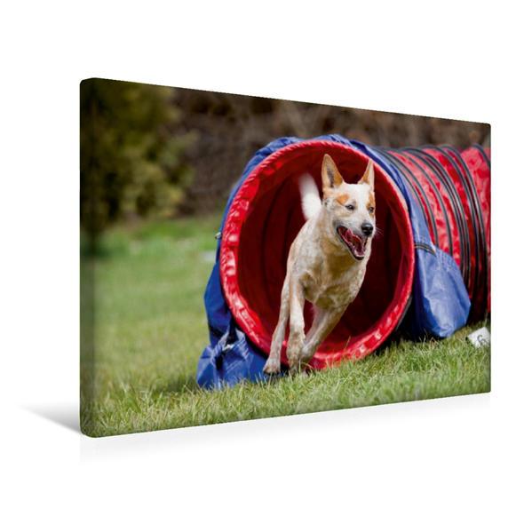 Premium Textil-Leinwand 45 cm x 30 cm quer, Ein Motiv aus dem Kalender Fliegende Hunde beim Agility | Wandbild, Bild auf Keilrahmen, Fertigbild auf echter Leinwand, Leinwanddruck - Coverbild