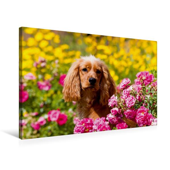 Premium Textil-Leinwand 75 cm x 50 cm quer, Roter Cocker zwischen Rosen und gelben Blumen   Wandbild, Bild auf Keilrahmen, Fertigbild auf echter Leinwand, Leinwanddruck - Coverbild