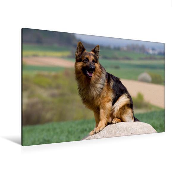 Premium Textil-Leinwand 120 cm x 80 cm quer, Deutscher Schäferhund | Wandbild, Bild auf Keilrahmen, Fertigbild auf echter Leinwand, Leinwanddruck - Coverbild