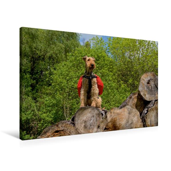 Premium Textil-Leinwand 90 cm x 60 cm quer, Holzthron am Wegrand | Wandbild, Bild auf Keilrahmen, Fertigbild auf echter Leinwand, Leinwanddruck - Coverbild