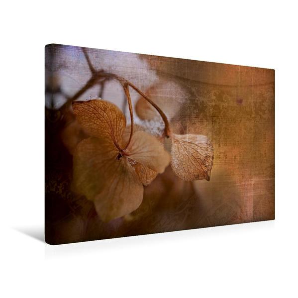 Premium Textil-Leinwand 45 cm x 30 cm quer, Hortensie | Wandbild, Bild auf Keilrahmen, Fertigbild auf echter Leinwand, Leinwanddruck - Coverbild