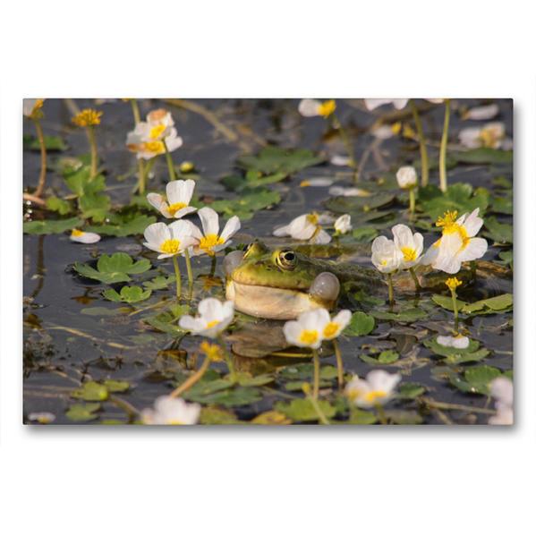 Premium Textil-Leinwand 90 cm x 60 cm quer, Wasserhanenfuss | Wandbild, Bild auf Keilrahmen, Fertigbild auf echter Leinwand, Leinwanddruck - Coverbild