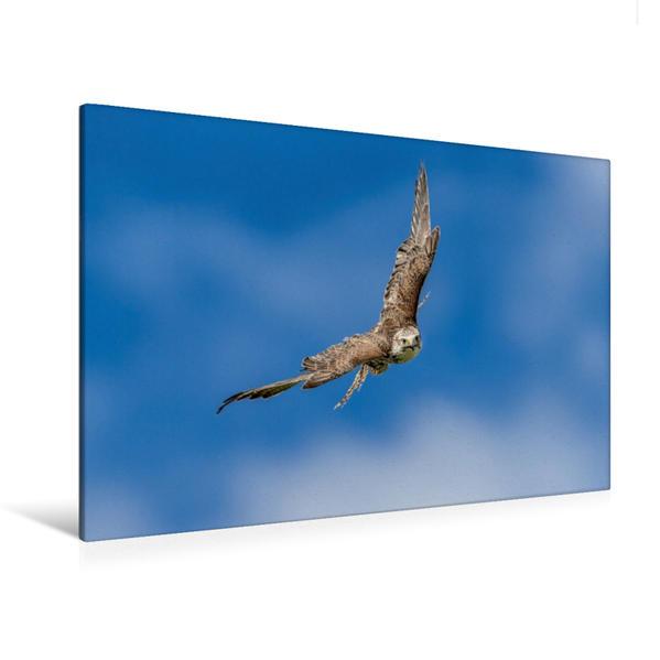 Premium Textil-Leinwand 120 cm x 80 cm quer, Sakerfalke   Wandbild, Bild auf Keilrahmen, Fertigbild auf echter Leinwand, Leinwanddruck - Coverbild