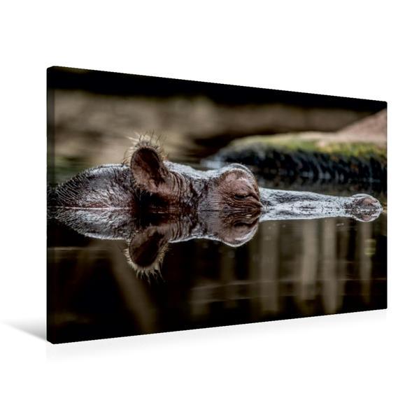 Premium Textil-Leinwand 75 cm x 50 cm quer, Ein Flußpferd | Wandbild, Bild auf Keilrahmen, Fertigbild auf echter Leinwand, Leinwanddruck - Coverbild