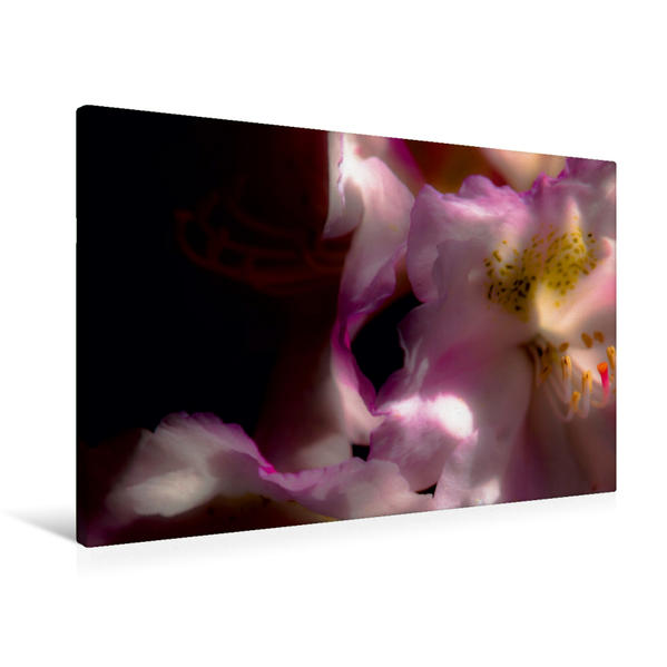 Premium Textil-Leinwand 90 cm x 60 cm quer, Rhododendron   Wandbild, Bild auf Keilrahmen, Fertigbild auf echter Leinwand, Leinwanddruck - Coverbild