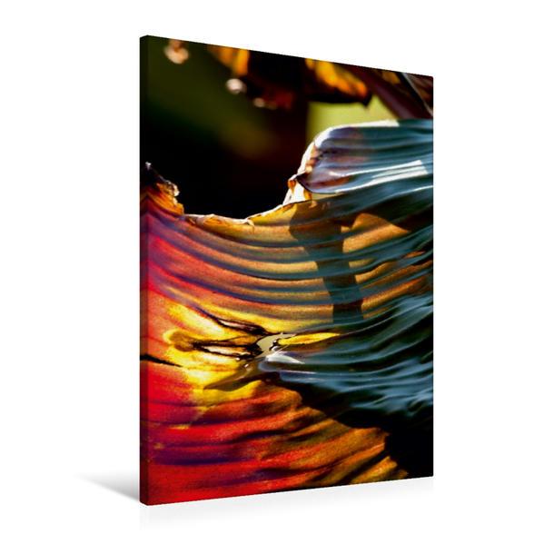 Premium Textil-Leinwand 60 cm x 90 cm hoch, Ein Motiv aus dem Kalender Ensete ventricosum 'Maurielii' - Zierbanane | Wandbild, Bild auf Keilrahmen, Fertigbild auf echter Leinwand, Leinwanddruck - Coverbild