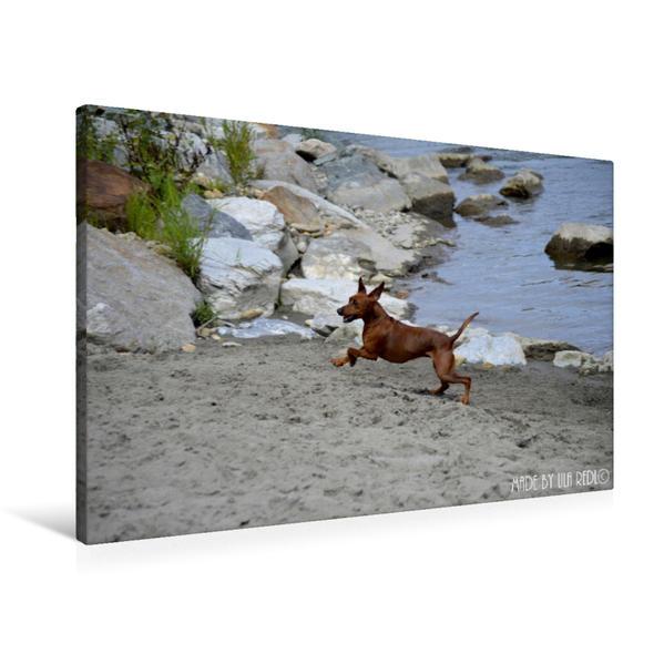 Premium Textil-Leinwand 90 cm x 60 cm quer, Strandgalopp | Wandbild, Bild auf Keilrahmen, Fertigbild auf echter Leinwand, Leinwanddruck - Coverbild