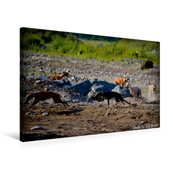 Premium Textil-Leinwand 90 cm x 60 cm quer, Die Meute | Wandbild, Bild auf Keilrahmen, Fertigbild auf echter Leinwand, Leinwanddruck - Coverbild