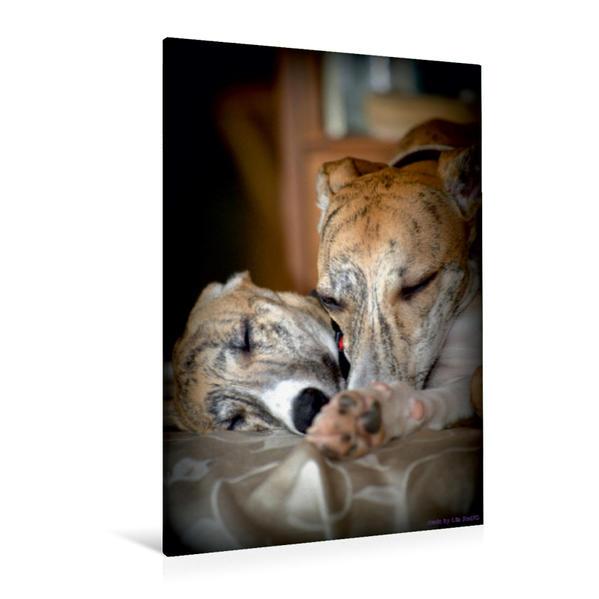 Premium Textil-Leinwand 80 cm x 120 cm  hoch, Classy Whippets | Wandbild, Bild auf Keilrahmen, Fertigbild auf echter Leinwand, Leinwanddruck - Coverbild