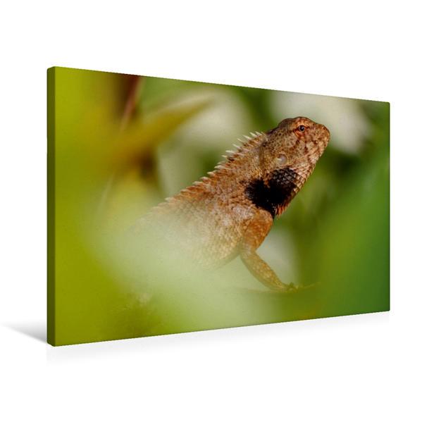 Premium Textil-Leinwand 75 cm x 50 cm quer, Ein Motiv aus dem Kalender Agamen - Echsen aus vergangener Zeit   Wandbild, Bild auf Keilrahmen, Fertigbild auf echter Leinwand, Leinwanddruck - Coverbild