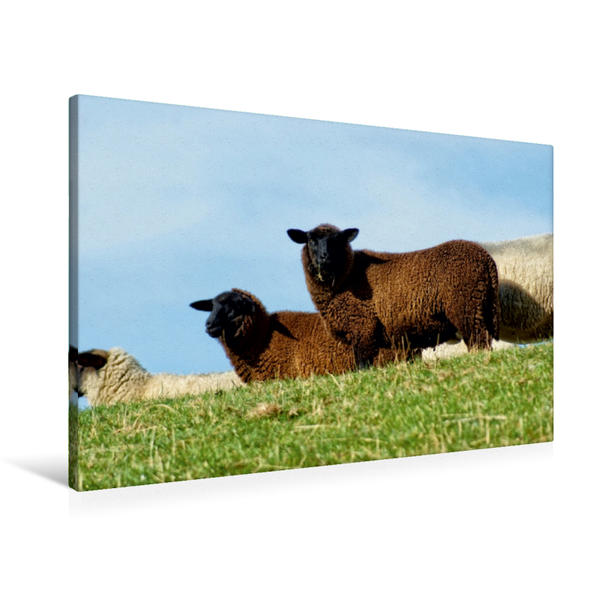 Premium Textil-Leinwand 90 cm x 60 cm quer, Blick vom Deich   Wandbild, Bild auf Keilrahmen, Fertigbild auf echter Leinwand, Leinwanddruck - Coverbild