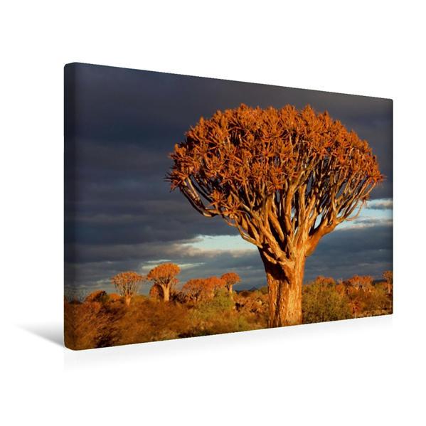 Premium Textil-Leinwand 45 cm x 30 cm quer, Ein Motiv aus dem Kalender Köcherbaum - Quiver tree - Kokerboom | Wandbild, Bild auf Keilrahmen, Fertigbild auf echter Leinwand, Leinwanddruck - Coverbild