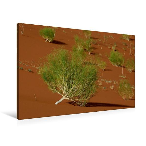 Premium Textil-Leinwand 90 cm x 60 cm quer, Ein Motiv aus dem Kalender Afrikanische Bäume | Wandbild, Bild auf Keilrahmen, Fertigbild auf echter Leinwand, Leinwanddruck - Coverbild