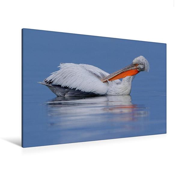 Premium Textil-Leinwand 120 cm x 80 cm quer, Krauskopfpelikan | Wandbild, Bild auf Keilrahmen, Fertigbild auf echter Leinwand, Leinwanddruck - Coverbild