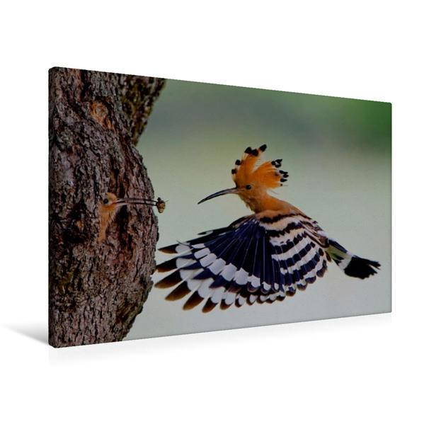 Premium Textil-Leinwand 90 cm x 60 cm quer, Ein Motiv aus dem Kalender Wiedehopf | Wandbild, Bild auf Keilrahmen, Fertigbild auf echter Leinwand, Leinwanddruck - Coverbild