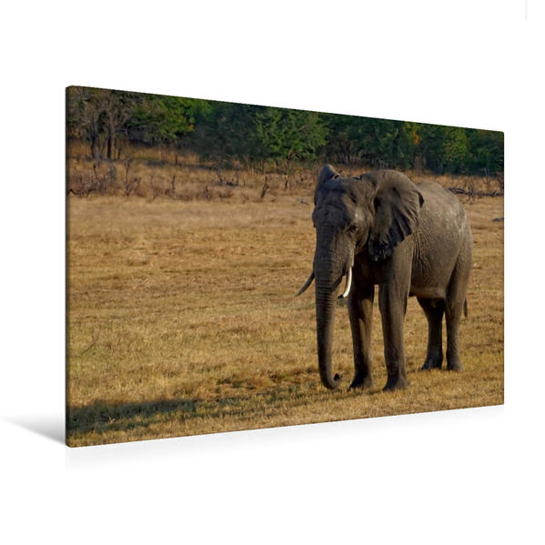Premium Textil-Leinwand 120 cm x 80 cm quer, Hwange | Wandbild, Bild auf Keilrahmen, Fertigbild auf echter Leinwand, Leinwanddruck - Coverbild