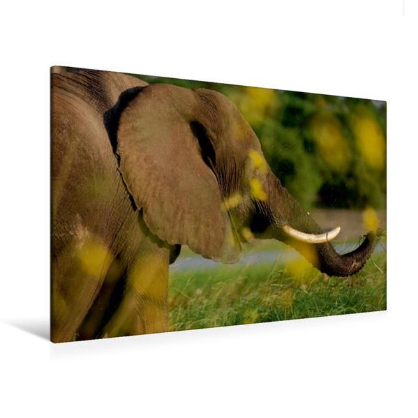 Premium Textil-Leinwand 120 cm x 80 cm quer, Ein Motiv aus dem Kalender Rüsseltiere - Afrikanische Elefanten   Wandbild, Bild auf Keilrahmen, Fertigbild auf echter Leinwand, Leinwanddruck - Coverbild