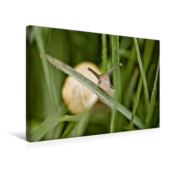 Premium Textil-Leinwand 45 cm x 30 cm quer, Ein Motiv aus dem Kalender Schnecken Allerlei | Wandbild, Bild auf Keilrahmen, Fertigbild auf echter Leinwand, Leinwanddruck - Coverbild