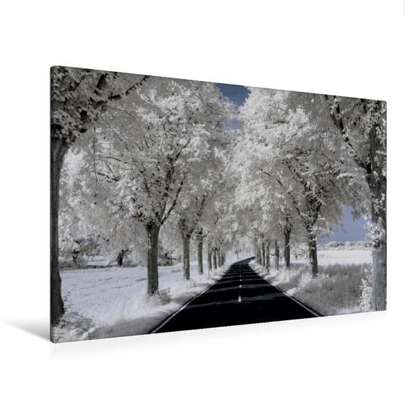 Premium Textil-Leinwand 120 cm x 80 cm quer, Ein Motiv aus dem Kalender Zauberhafte Infrarot-Fotografie - Baumallee | Wandbild, Bild auf Keilrahmen, Fertigbild auf echter Leinwand, Leinwanddruck - Coverbild