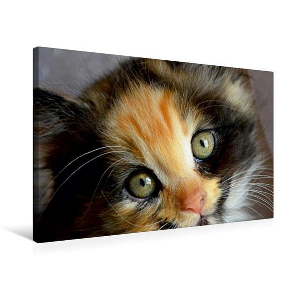 Premium Textil-Leinwand 75 cm x 50 cm quer, Grüne Augen | Wandbild, Bild auf Keilrahmen, Fertigbild auf echter Leinwand, Leinwanddruck - Coverbild