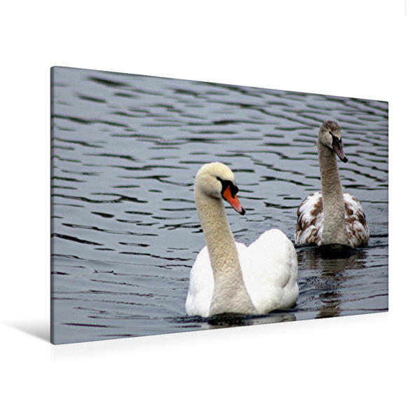 Premium Textil-Leinwand 120 cm x 80 cm quer, Vater und Sohn   Wandbild, Bild auf Keilrahmen, Fertigbild auf echter Leinwand, Leinwanddruck - Coverbild