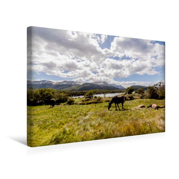 Premium Textil-Leinwand 45 cm x 30 cm quer, Pferde - Feuerland Nationalpark | Wandbild, Bild auf Keilrahmen, Fertigbild auf echter Leinwand, Leinwanddruck - Coverbild