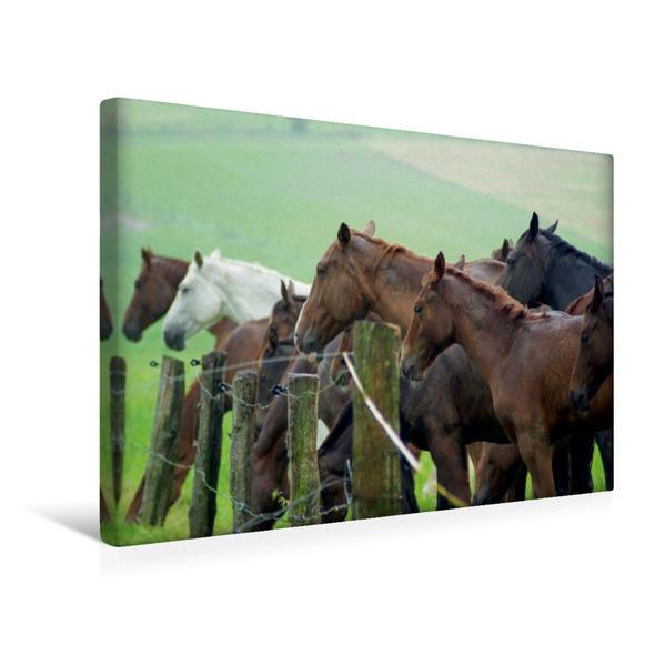 Premium Textil-Leinwand 45 cm x 30 cm quer, im Regen stehen | Wandbild, Bild auf Keilrahmen, Fertigbild auf echter Leinwand, Leinwanddruck - Coverbild