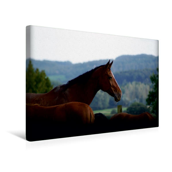 Premium Textil-Leinwand 45 cm x 30 cm quer, Aufpasser | Wandbild, Bild auf Keilrahmen, Fertigbild auf echter Leinwand, Leinwanddruck - Coverbild