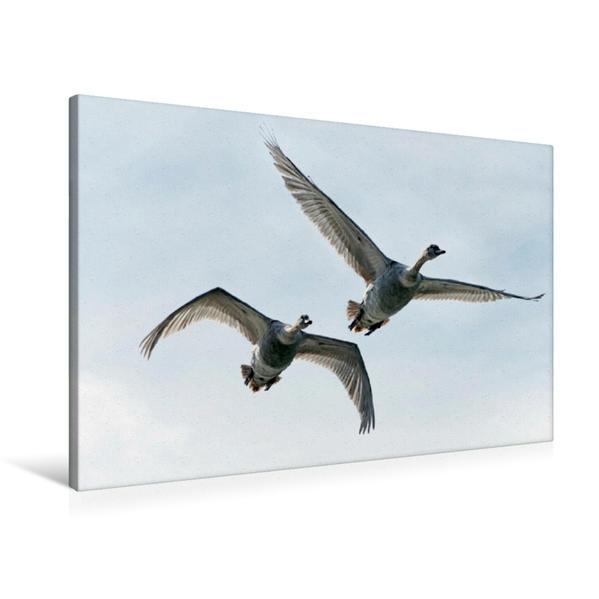 Premium Textil-Leinwand 90 cm x 60 cm quer, Ein Motiv aus dem Kalender Schwäne im Flug | Wandbild, Bild auf Keilrahmen, Fertigbild auf echter Leinwand, Leinwanddruck - Coverbild