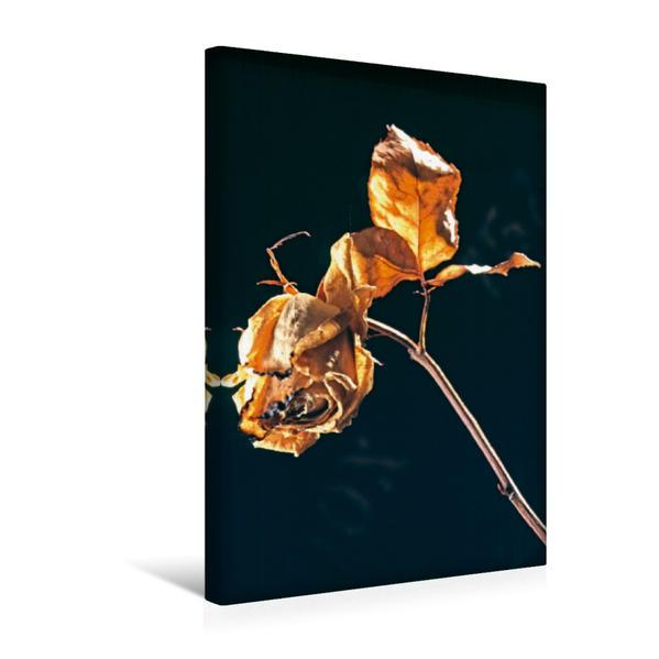 Premium Textil-Leinwand 30 cm x 45 cm hoch, Ein Motiv aus dem Kalender Mortalität  - Die Ästhetik der vergänglichen Natur | Wandbild, Bild auf Keilrahmen, Fertigbild auf echter Leinwand, Leinwanddruck - Coverbild