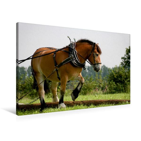 Premium Textil-Leinwand 90 cm x 60 cm quer, Rückepferd bei der Arbeit   Wandbild, Bild auf Keilrahmen, Fertigbild auf echter Leinwand, Leinwanddruck - Coverbild