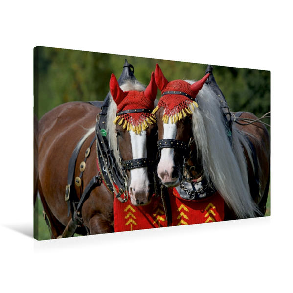Premium Textil-Leinwand 90 cm x 60 cm quer, Schwarzwälder Füchse | Wandbild, Bild auf Keilrahmen, Fertigbild auf echter Leinwand, Leinwanddruck - Coverbild