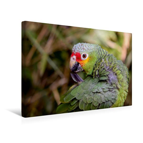 Premium Textil-Leinwand 45 cm x 30 cm quer, Gelbwangenamazone | Wandbild, Bild auf Keilrahmen, Fertigbild auf echter Leinwand, Leinwanddruck - Coverbild