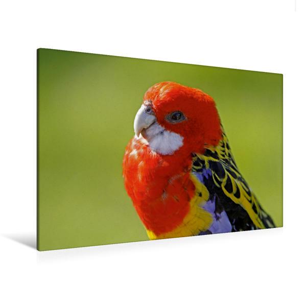 Premium Textil-Leinwand 120 cm x 80 cm quer, Rosellasittich | Wandbild, Bild auf Keilrahmen, Fertigbild auf echter Leinwand, Leinwanddruck - Coverbild
