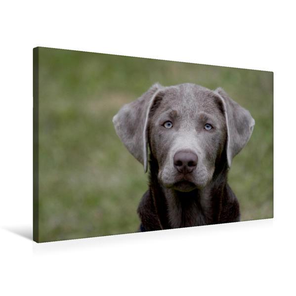 Premium Textil-Leinwand 75 cm x 50 cm quer, Labrador-Welpe   Wandbild, Bild auf Keilrahmen, Fertigbild auf echter Leinwand, Leinwanddruck - Coverbild
