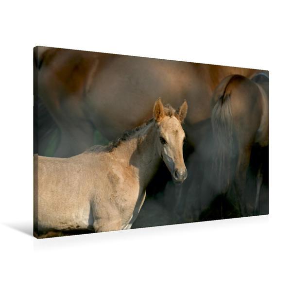 Premium Textil-Leinwand 90 cm x 60 cm quer, Wildpferd-Fohlen | Wandbild, Bild auf Keilrahmen, Fertigbild auf echter Leinwand, Leinwanddruck - Coverbild