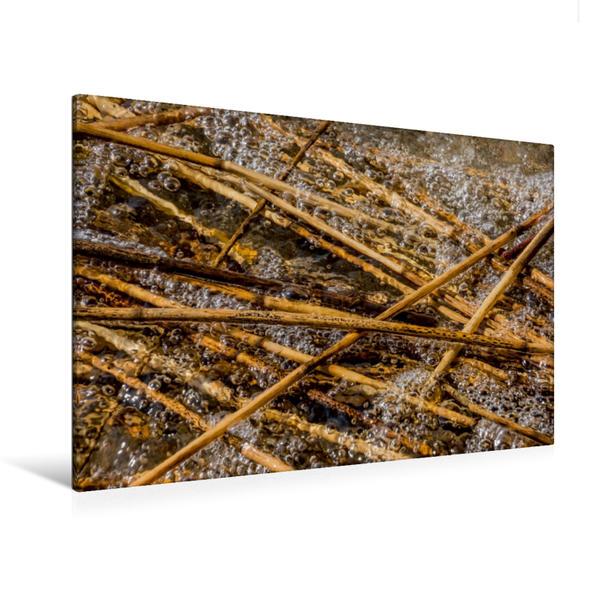 Premium Textil-Leinwand 120 cm x 80 cm quer, Schäumendes Wasser und Schilfrohr   Wandbild, Bild auf Keilrahmen, Fertigbild auf echter Leinwand, Leinwanddruck - Coverbild
