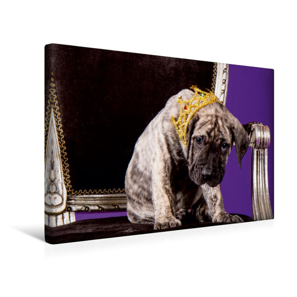 Premium Textil-Leinwand 45 cm x 30 cm quer, L'Zyon El Sueno Del Amigo, kleiner König | Wandbild, Bild auf Keilrahmen, Fertigbild auf echter Leinwand, Leinwanddruck - Coverbild