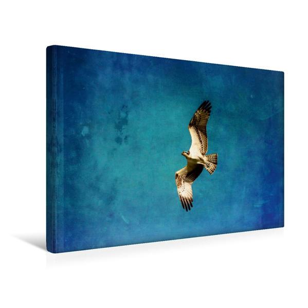 Premium Textil-Leinwand 45 cm x 30 cm quer, Fischadler | Wandbild, Bild auf Keilrahmen, Fertigbild auf echter Leinwand, Leinwanddruck - Coverbild