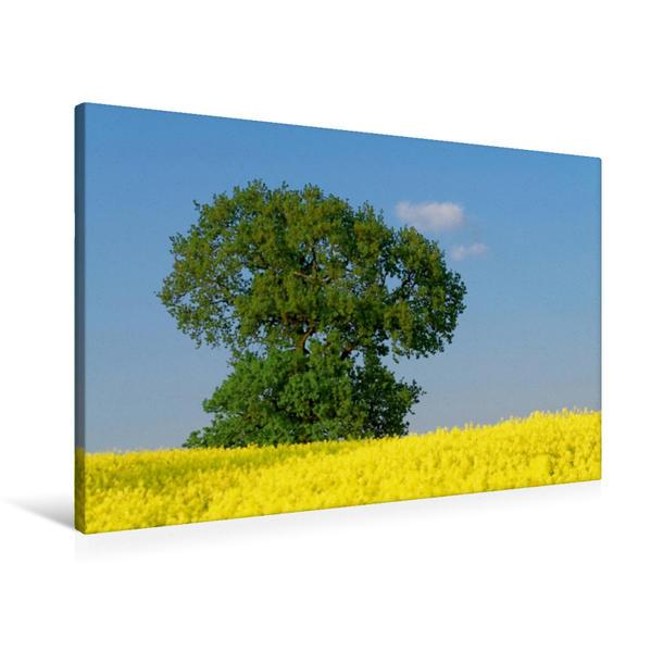 Premium Textil-Leinwand 90 cm x 60 cm quer, Sommerfarben | Wandbild, Bild auf Keilrahmen, Fertigbild auf echter Leinwand, Leinwanddruck - Coverbild
