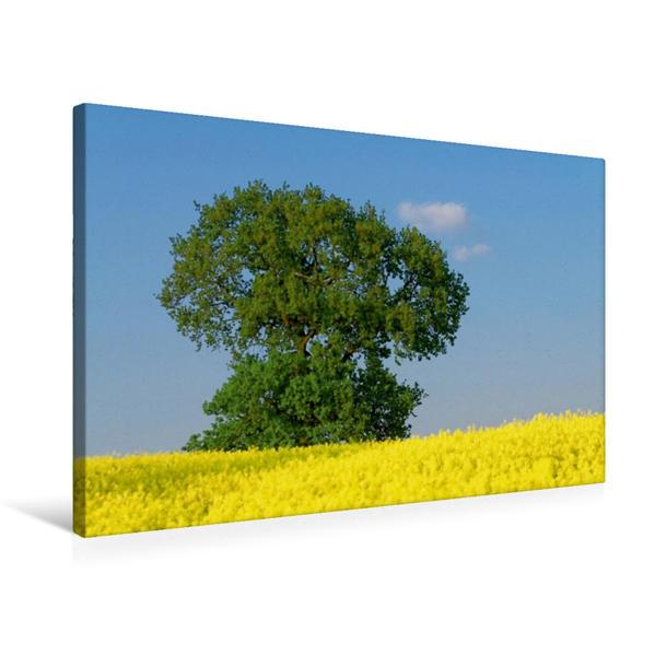 Premium Textil-Leinwand 75 cm x 50 cm quer, Sommerfarben   Wandbild, Bild auf Keilrahmen, Fertigbild auf echter Leinwand, Leinwanddruck - Coverbild