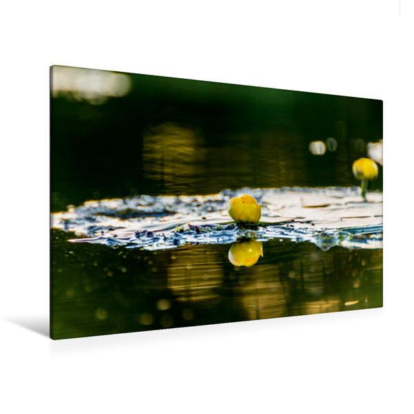 Premium Textil-Leinwand 120 cm x 80 cm quer, Teichrose | Wandbild, Bild auf Keilrahmen, Fertigbild auf echter Leinwand, Leinwanddruck - Coverbild