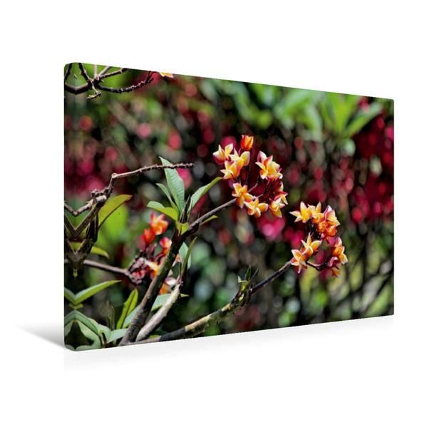 Premium Textil-Leinwand 45 cm x 30 cm quer, Frangipaniblüten, Bali | Wandbild, Bild auf Keilrahmen, Fertigbild auf echter Leinwand, Leinwanddruck - Coverbild