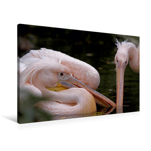 Premium Textil-Leinwand 90 cm x 60 cm quer, Streitende Rosapelikane | Wandbild, Bild auf Keilrahmen, Fertigbild auf echter Leinwand, Leinwanddruck - Coverbild