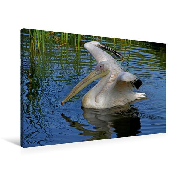 Premium Textil-Leinwand 90 cm x 60 cm quer, Schwimmender Rosapelikan | Wandbild, Bild auf Keilrahmen, Fertigbild auf echter Leinwand, Leinwanddruck - Coverbild